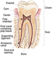 What is endodontic treatment?