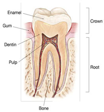 Why does a cracked tooth hurt?